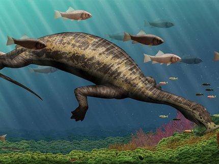 В Китае нашли останки динозавра-вегетарианца