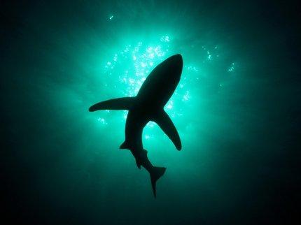 Ученые: сражаться сраком несомненно поможет кровь акул