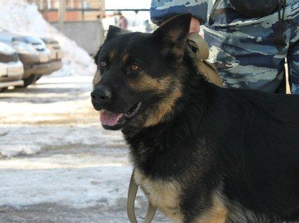 ВБашкирии служебная собачка случайно раскрыла правонарушение