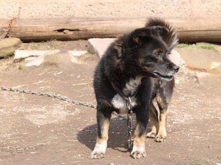 Сорвавшийся сцепи пес покусал 2-х  восьмилетних детей вУфе