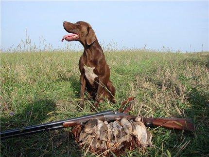 ВБашкирии впериод весенней охоты выявлено 47 нарушений