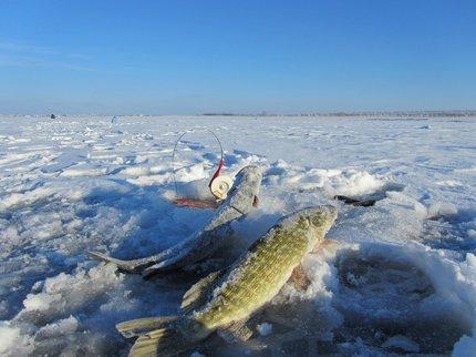 ВТверской области Роспотребнадзор изъял неменее 840кг рыбной продукции
