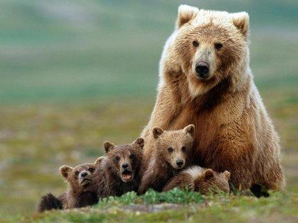 Происшествие натрассе: вБашкирии сбит медвежонок