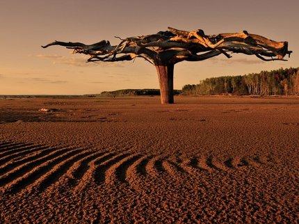 Первые растения наЗемле росли корнями вверх— Ученые