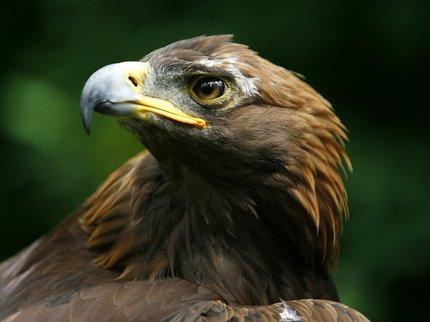 Ветеринары Центра спасения диких животных вБашкирии спасли беркута