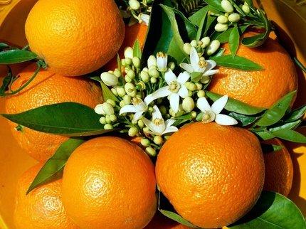 Виноград с апельсином защитят от ожирения и диабета