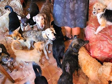 ВБашкирии приставы выселили изквартиры 40 собак